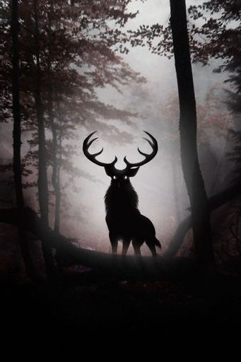 Deer In Dark Forest
