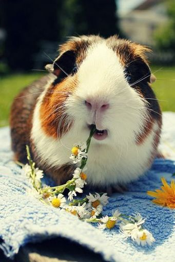 الأرنب لطيف