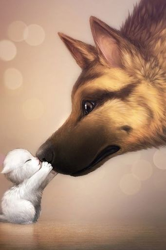 Kitten & Shepherd Dog