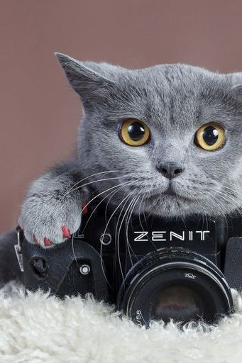 Cute Gray Cat With Camera