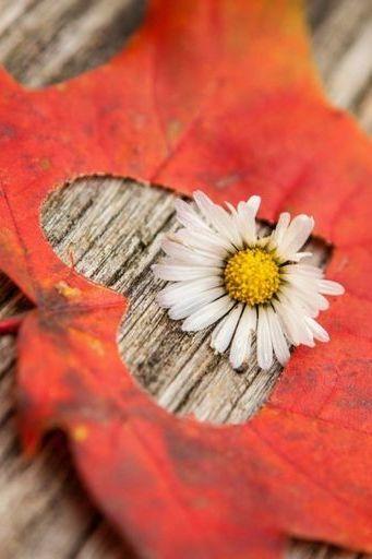 Leaf Heart And Daisy