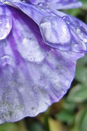 Floral Petals