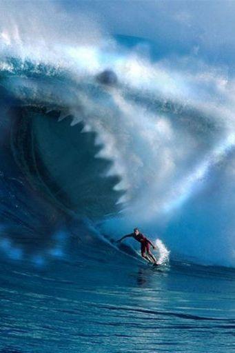 Shark Wave Water Surfing Ocean