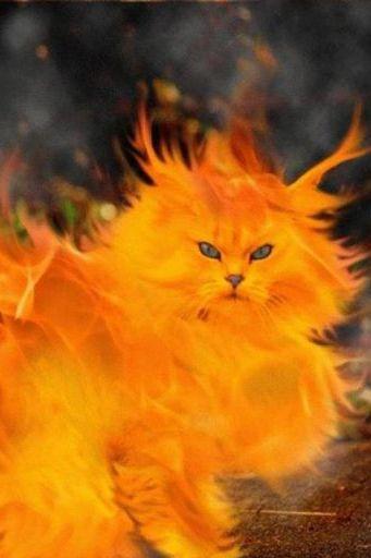 แมวดับเพลิง