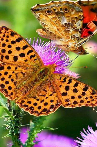 Butterfly (01)