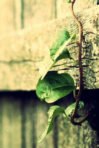 Greliv Leaf Woods