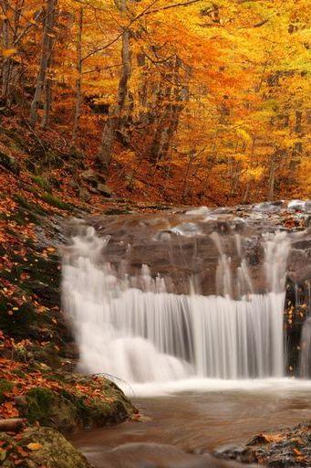 Autumn Wood Leaf Fall