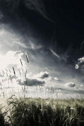 Clouds Grass नेचर