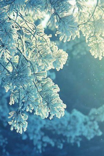Sunlight-Frost