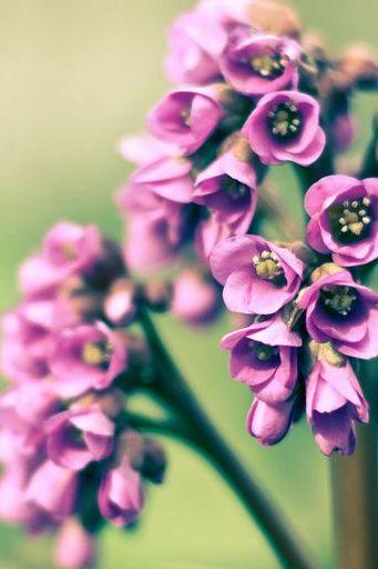 वसंत ऋतु फ्लॉवर
