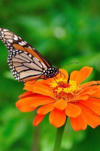 Butterfly (02)