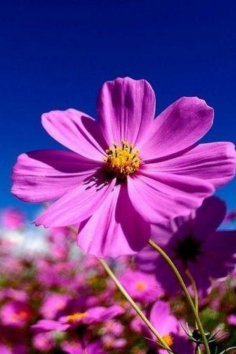 P Urple Flowers