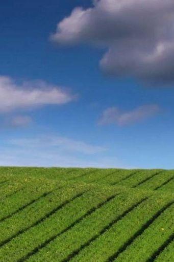 Green Nature Fields