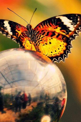Motyl (05)
