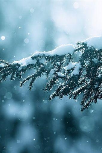 सर्दियों की बर्फ