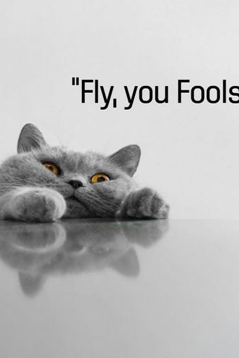 Fly You Fool