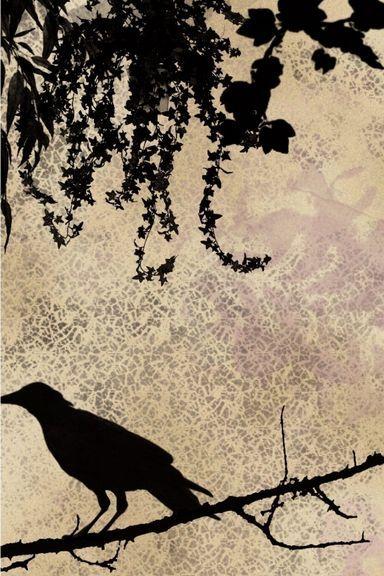 Crow Eye Fantasy