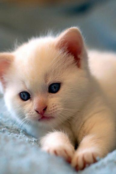 แมวน่ารัก