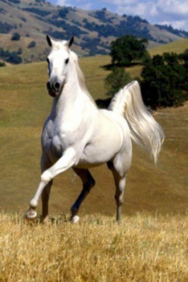 Con ngựa