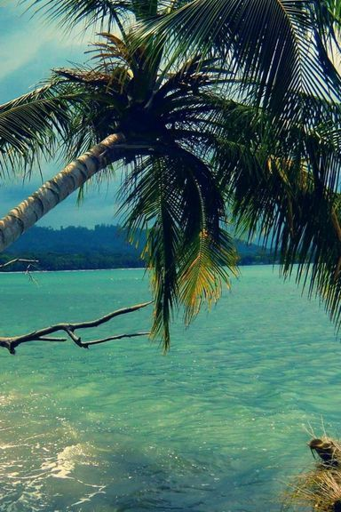 Palm Tree In Strom Wallpaper Download To Your Mobile From