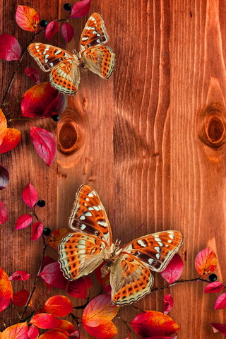 Butterflies On Wood