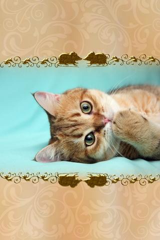 Kitten 640х960