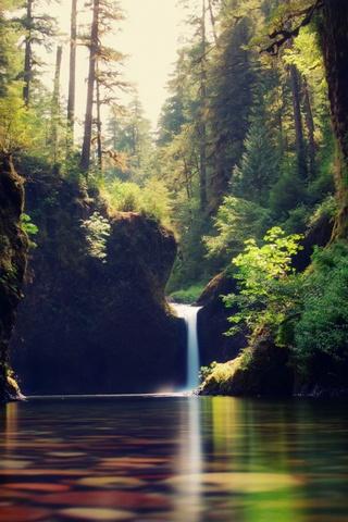 Лесные потоки