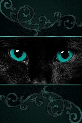 Black Cat. Green Eyes. 640х960
