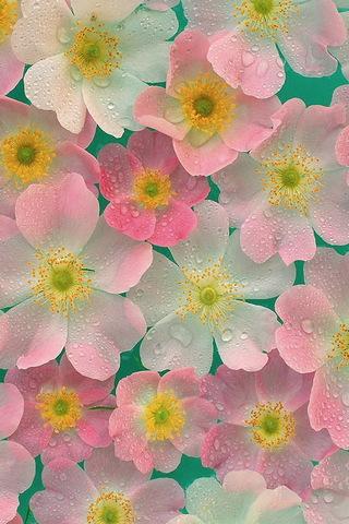 Wet Flowers