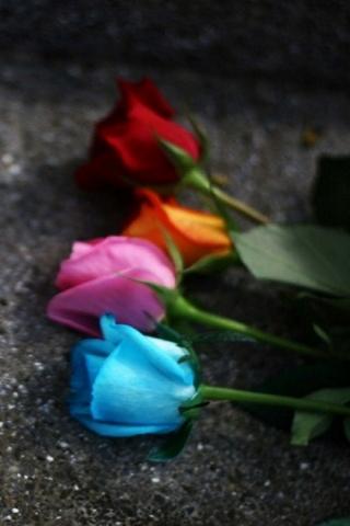 Roses Colour