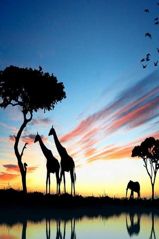 Giraffe Sunset Africa