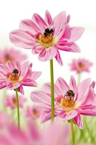 Flowers&bee