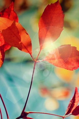 Brilho do outono