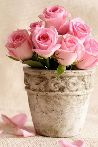 Rosas Românticas