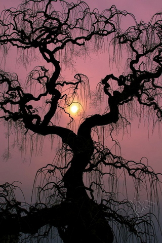 Amazing Sunset Tree