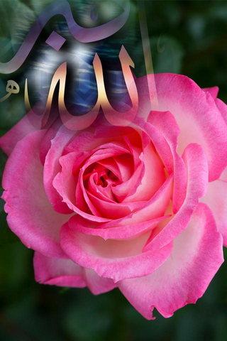 Rose Allah Akbar