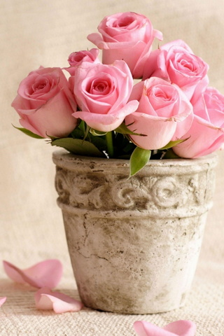 Roses In The Pot