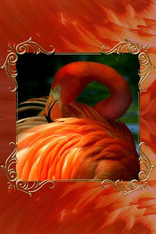 Flamingo 640х960