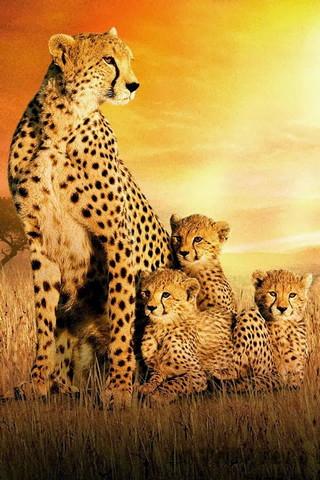 Cetaah Family