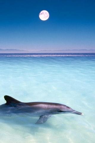Dolphin&moon