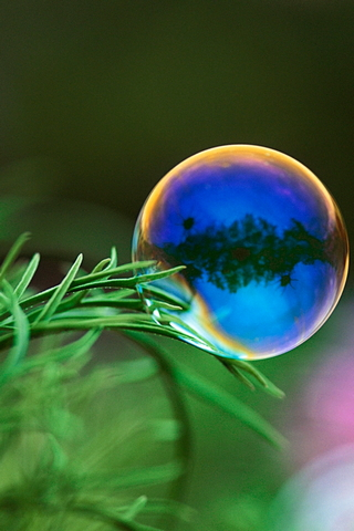 Glob Drop