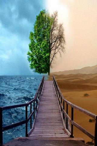 Sahara&sea