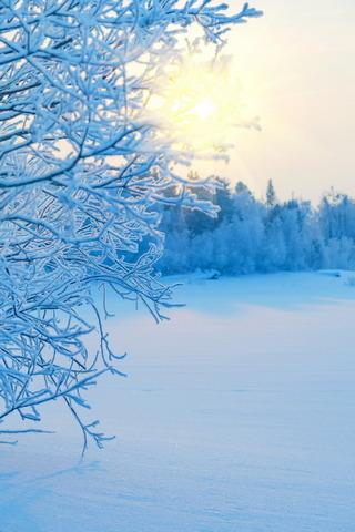 Kış Güneşi