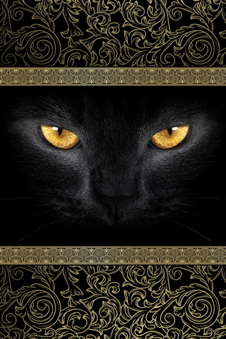 Black Cat. Gold Eyes. 640х960