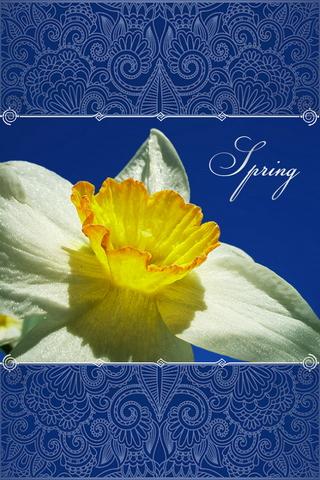 Narcissus và bầu trời mùa xuân 640х960
