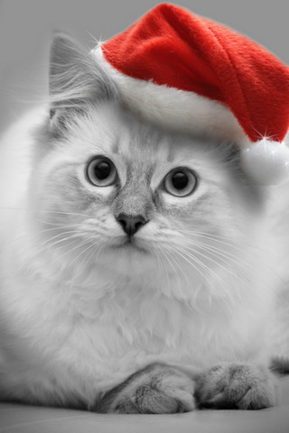 크리스마스 키튼
