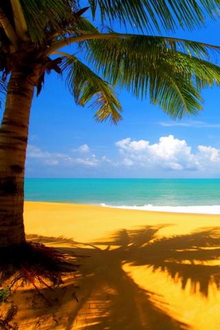 Güneşli Yaz Plaj Günü