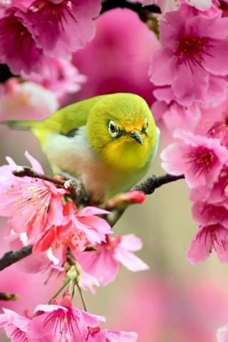 Pássaro primavera