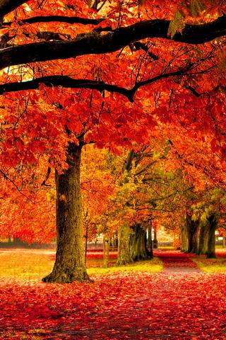 حديقة الخريف
