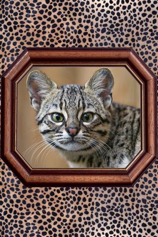 Wild Cat 640х960